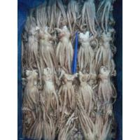 China squid tentacle and wholesale frozen seafood fish wholesale