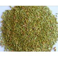 How To Get Rid Of Dog Fennel Naturally