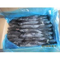 Buy cheap Seafood Frozen Tuna SkipJack Frozen Bonito Fish from wholesalers
