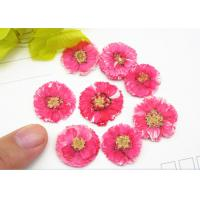 China 1 CM Small Dried Flowers Dye Absorption Daisy For Wall Painting Decoration wholesale
