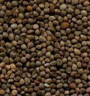 Wholesale BROWN PERILLASEEDS from china suppliers