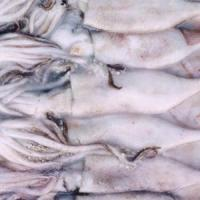 China [C-1-1]frozensquid wholesale