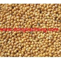China Yellow Millet wholesale