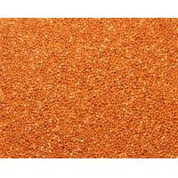 China Red Broomcorn Millet wholesale