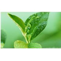 China Green Tea Polyphenols wholesale