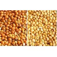 China millet in husk wholesale