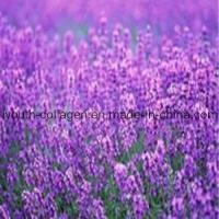 Wholesale 100% Natural Lavender Pollen Tablets from china suppliers
