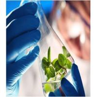 China Agriculture Agricultural Biotechnology - Global Market Outlook (2016-2022) wholesale