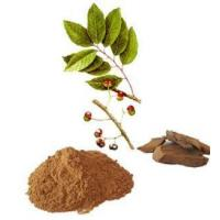 China Pygeum Africanum Bark Extract (Prunus Africana) for Benign Prostatic Hyperplasia wholesale