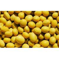 China soy isoflavones wholesale