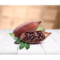 China Cocoa Beans Organic on sale