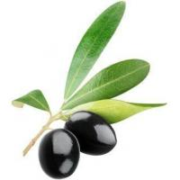 China Pure Olive Leaf Extract Oleuropein for Cosmetic wholesale