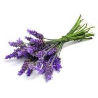 China 100% Pure Natural Lavender Essential Oil For Hair, Skin Care Lavender Oil wholesale