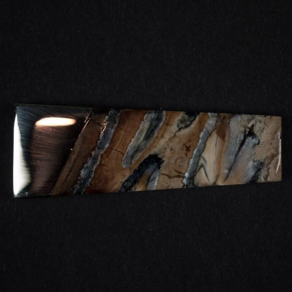 Quality WOOLLY MAMMOTH TOOTH MONEY CLIP NATURAL for sale