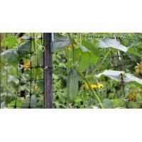 China Plastic trellis a qualified assistant of your trellis garden wholesale