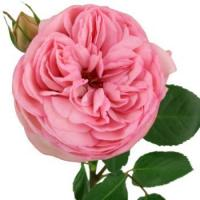 Wholesale Peony Rose Bridal Piano from china suppliers
