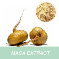 China Manufacturer Medical Grade Free Sample 10:1 Root Maca Extract