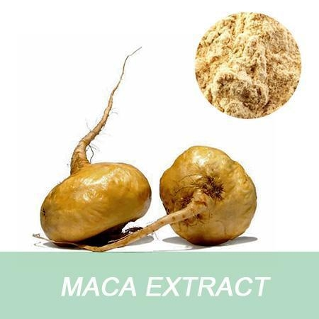 Quality China Manufacturer Medical Grade Free Sample 10:1 Root Maca Extract for sale