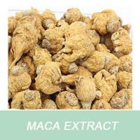 China Weight Loss Product Maca Extract Powder 100% Passed 80 Mesh wholesale