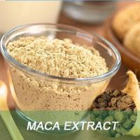 China Health product Maca extract powder wholesale