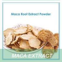 China Hot sale dired and fresh maca root powder wholesale