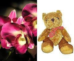 Quality Flowers Fresh Orchids and Teddy Bear for sale