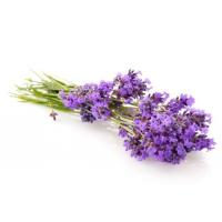 Natural Essential Oil Lavender Essential Oil
