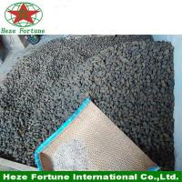 Amazing growing rate hybrid 9501 seeds for planting