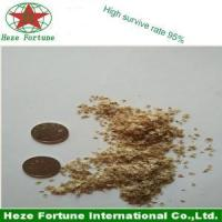 High survive rate Barren resistant paulownia seeds