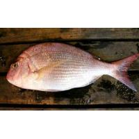 Mackerel Frozen Red Sea Bream W/R