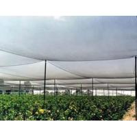 China Anti-Hail Net made of high-density polyethylene, resistance to stretching wholesale