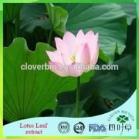 China Lotus Root Powder Extract 20:1 /Lotus Seed Extract Nuciferin 0.2% 1% Lotus Leaf Extract wholesale