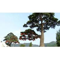 Buy cheap Simulation of pine and cypress trees from wholesalers