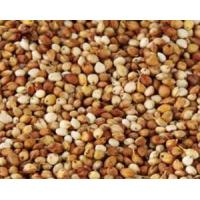 China IMPORTED PRODUCTS sorghum wholesale