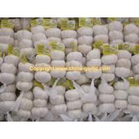 Prepared White Garlic in 3P(200g) package