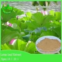 China Weight Loss Lotus Leaf Extract wholesale