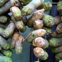 China Vegetables turnip ID: B1-01 wholesale