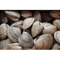 China Frozen Cooked Cockle Clam wholesale