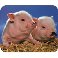 China JM100P+-The special enzyme in sucking pig feedingstuff wholesale