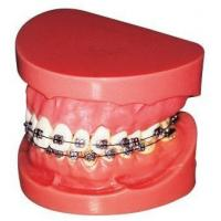 China Orthodontic Instruments Teeth Model on sale