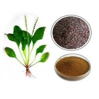 China Plantain Extract wholesale