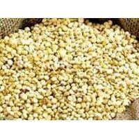 Wholesale Jawar from china suppliers