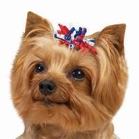 Buy cheap Dog Grosgrain Ribbon Curls from wholesalers