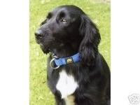 Latest Magnetic Dog Collars Buy Magnetic Dog Collars