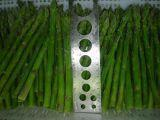 China Agriculture & Food Sell Fresh Asparagus wholesale