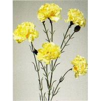 Buy cheap Carnations - 5 on a stem from wholesalers