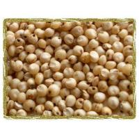 Wholesale Sorghum Seeds from china suppliers