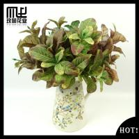 China Downy magnolia Leaves-G00072 wholesale