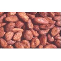 China Western Africa Cocoa Bean on sale
