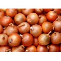 China Fresh yellow onion wholesale